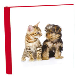 Album Amici Animali